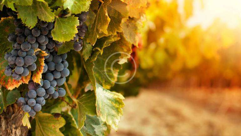We Invite You to These Wonderful Wine Tasting Events